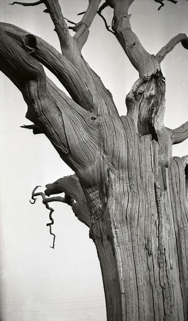 Dead Tree, Romney Marsh by Paul Nash