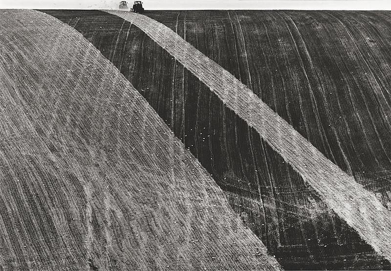 Ploughing Near Falmer by unkown