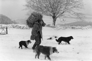 James Ravilious – With Dogs in the Snow by unkown